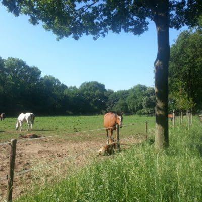 Ontspannende paarden