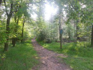 Fietsen door het bos