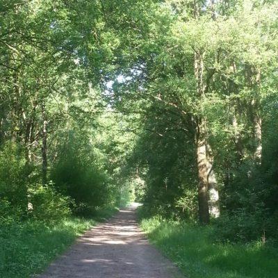 Wandelen op het bospad
